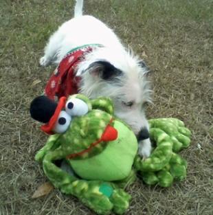 Bone1-Frog