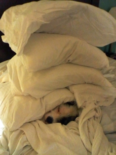 Cute-Under-Stack-Pillows