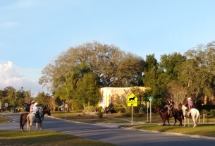 Horses with Horse Crossing Sign Corner