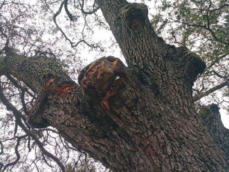 A Metal in Tree
