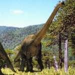 Dinosaur Monkey Puzzle Chilean Pine